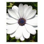 Beautiful Blossoming White Osteospermum Customized Letterhead