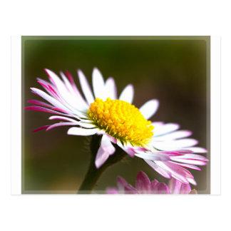 beautiful blossoms  petals romance romantic bridal postcard
