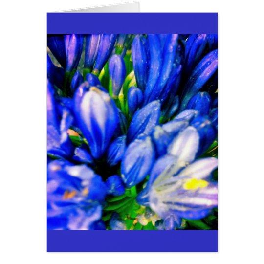 Beautiful Blue Agapanthus Blank Greeing Card