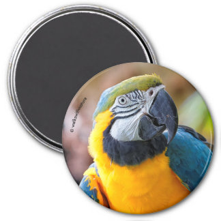 Beautiful Blue and Gold Macaw Magnet