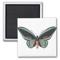 Beautiful Blue Butterfly Art Magnet
