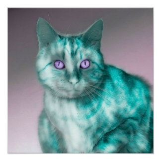 Beautiful blue cat with purple eyes illustration poster
