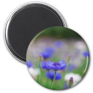 Beautiful blue cornflower products - greeting card 2 inch round magnet