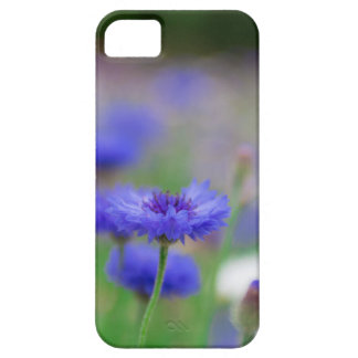 Beautiful blue cornflower products - greeting card iPhone SE/5/5s case