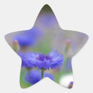 Beautiful blue cornflower products - greeting card star sticker