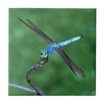 Beautiful Blue Dragonfly Photo design Tile