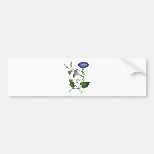 Beautiful Blue Embroidered Morning Glories Bumper Stickers