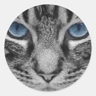 Beautiful blue eyed cat portrait round stickers
