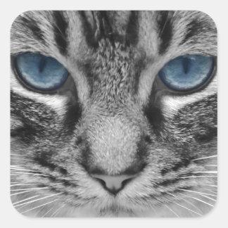 Beautiful blue eyed cat portrait sticker