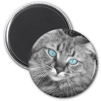 Beautiful Blue Eyed Kitty Magnet