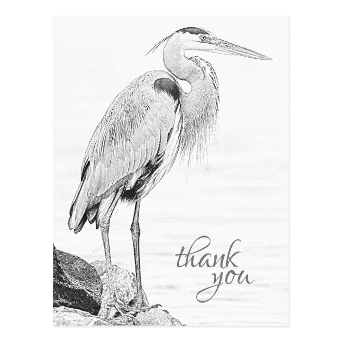 Beautiful Blue Heron Water Bird Sketch Thank You Postcard Zazzle Com