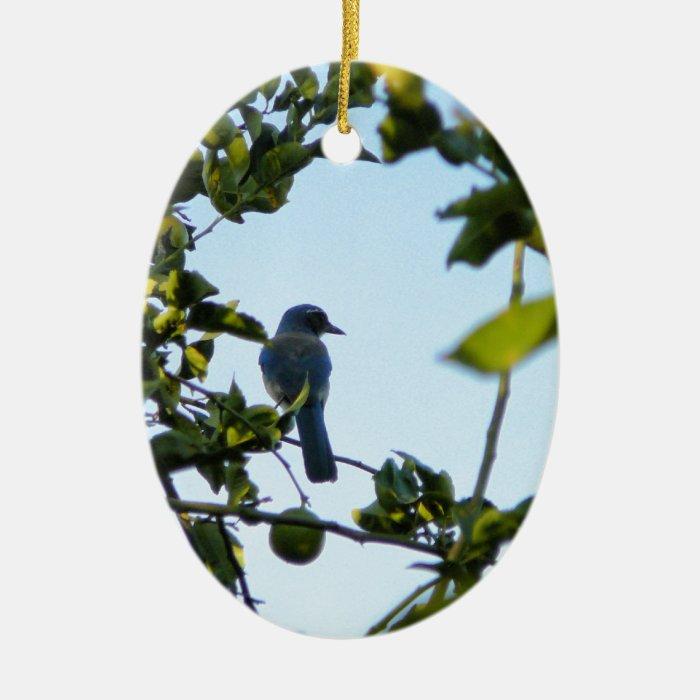 Beautiful Blue Jay Bird Ceramic Ornament