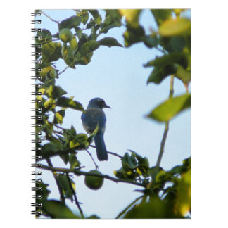 Beautiful Blue Jay Bird Journal