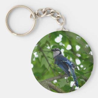 Beautiful Blue Jay bird Keychain