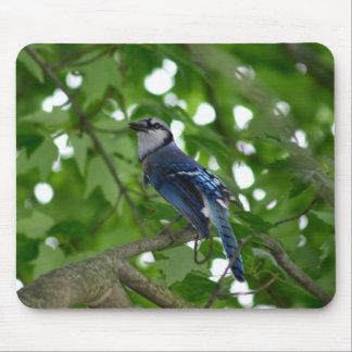Beautiful Blue Jay bird Mouse Pad
