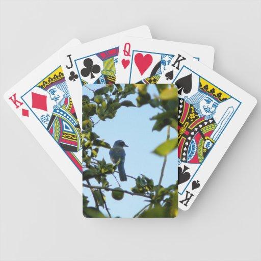 Beautiful Blue Jay Bird Poker Deck
