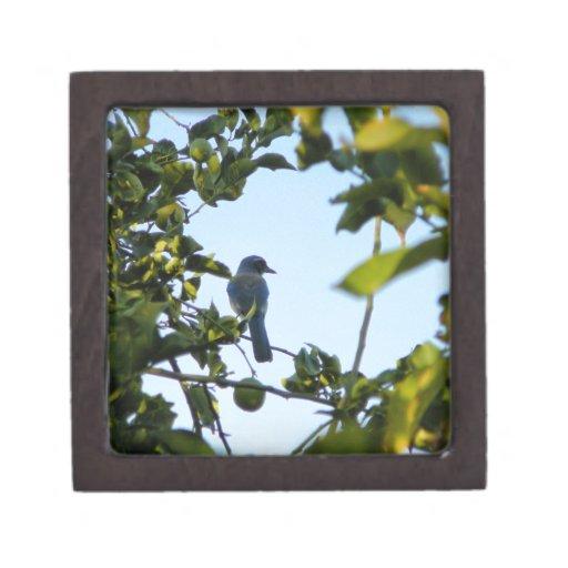 Beautiful Blue Jay Bird Premium Gift Box