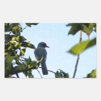 Beautiful Blue Jay Bird Rectangular Sticker