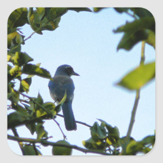 Beautiful Blue Jay Bird Sticker