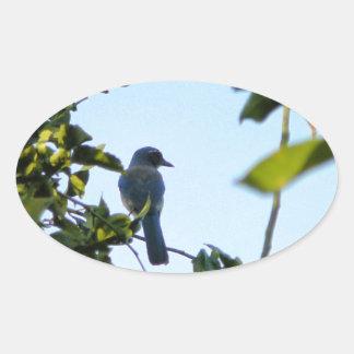 Beautiful Blue Jay Bird Stickers
