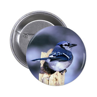 Beautiful Blue Jay Button