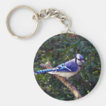 Beautiful Blue Jay Key Chain