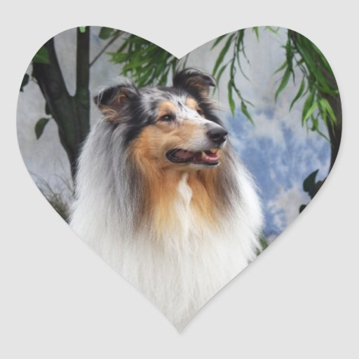 Beautiful blue merle Collie dog sticker, gift idea Heart Sticker