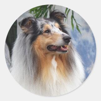 Beautiful blue merle Collie dog sticker, gift idea