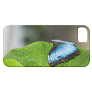Beautiful Blue Morpho Butterfly Iphone6 plus case iPhone 5 Case