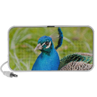 Beautiful blue peacock portable doodle speakers