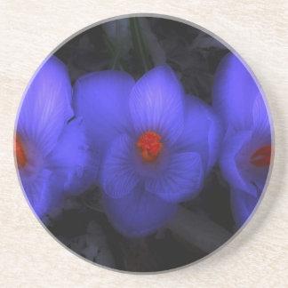 Beautiful Blue Purple Crocus Blooms Coaster