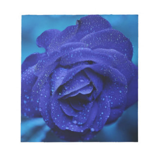 Beautiful blue rose note pads