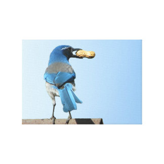 Beautiful Blue Sc Jay w/Nut Stretched Canvas Print