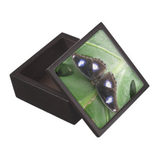 Beautiful Blue Spotted Butterfly Gift Box
