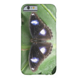 Beautiful Blue Spotted Butterfly iPhone Case iPhone 6 Case