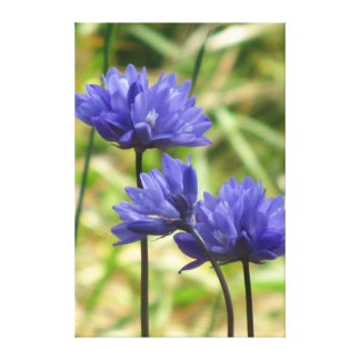 Beautiful Blue Spring Flowers Canvas Print
