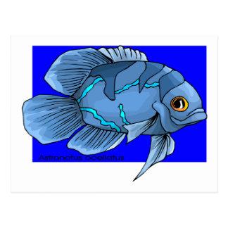 Beautiful Blue Tropical Oscar Fish Postcard