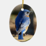Beautiful Bluebird Double-Sided Oval Ceramic Christmas Ornament