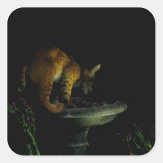 Beautiful Bobcat & Birdbath Square Sticker