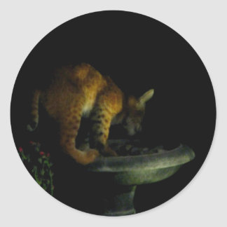 Beautiful Bobcat & Birdbath Classic Round Sticker