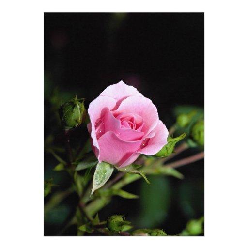 Beautiful Bonica Shrub Rose 'Meidomanac' Personalized Invites