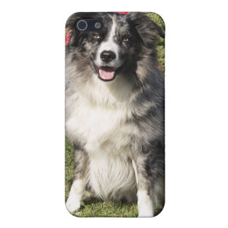Beautiful Border Collie Case For iPhone SE/5/5s