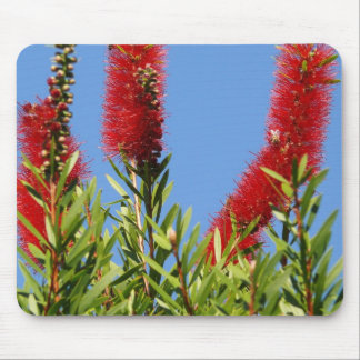 Beautiful Bottlebrush Mouse Pad