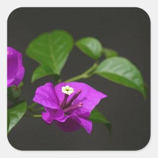 Beautiful bougainvillea flower square sticker