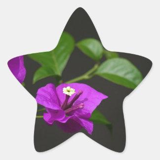 Beautiful bougainvillea flower star sticker