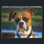 "Beautiful Boxers 2017 Calendar<br><div class=""desc"">Get your Beautiful Boxers 2017 Calendar! We searched far and wide for fantastic photos of Boxers for this calendar, and after running a contest among boxer enthusiasts all over the world, chose the best of the best! This calendar represents our beloved Boxer dogs, charming and sweet, just the way we...</div>"