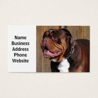 beautiful breed dog renascence bulldog business card