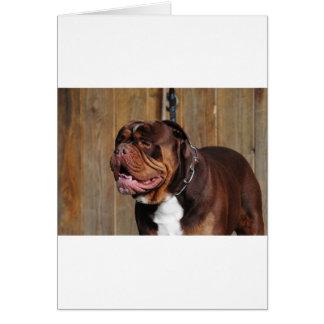 beautiful breed dog renascence bulldog card