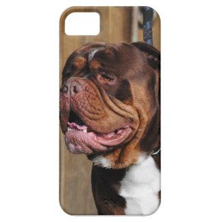 beautiful breed dog renascence bulldog iPhone 5 case