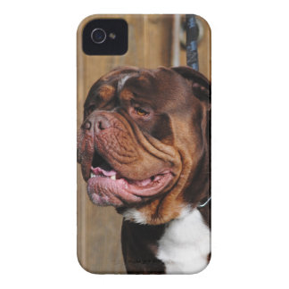 beautiful breed dog renascence bulldog iPhone 4 Case-Mate case